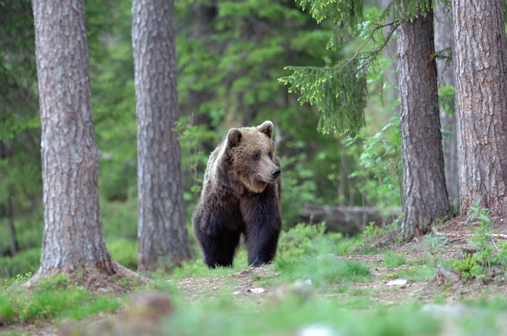 orso una possibile inversione di tendenza nel trend della On affittare una cabina nel grande lago orso